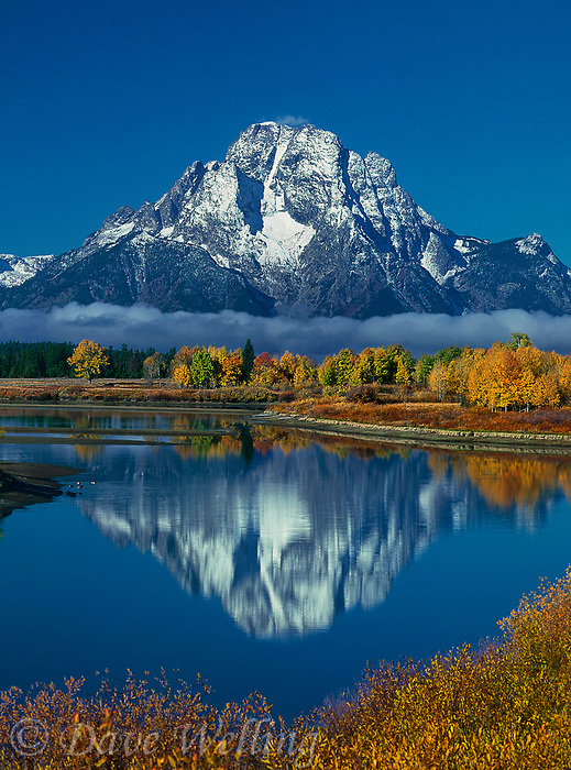 749450333v morning lights up fall colored aspens mount moran and the teton range with the snake river in the foreground at oxbow bend in grand tetons national park wyoming