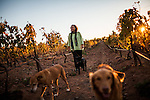 BAJA CALIFORNIA - NOVEMBER 25, 2013:  Natalia Badan, owner of the Mogor Badan winery, walks through her vineyard in the Valle de Guadalupe. Badan, a lifelong resident of the valley, and others in Mexico's wine country are protesting the mayor's relaxing of zoning regulations they say will lead to a drastic change in the culture of  the popular tourist destination.  CREDIT: Max Whittaker for The New York Times