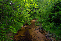 The Sable River flows through dense and shady woods in the Grand Sable Dunes in Pictured Rocks National Lakeshore near Grand Marais Michigan.