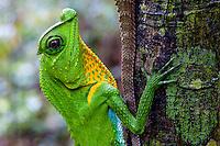 Sri Lankan Reptiles