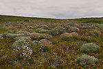 Flowers dot the hillside in South West Portugal
