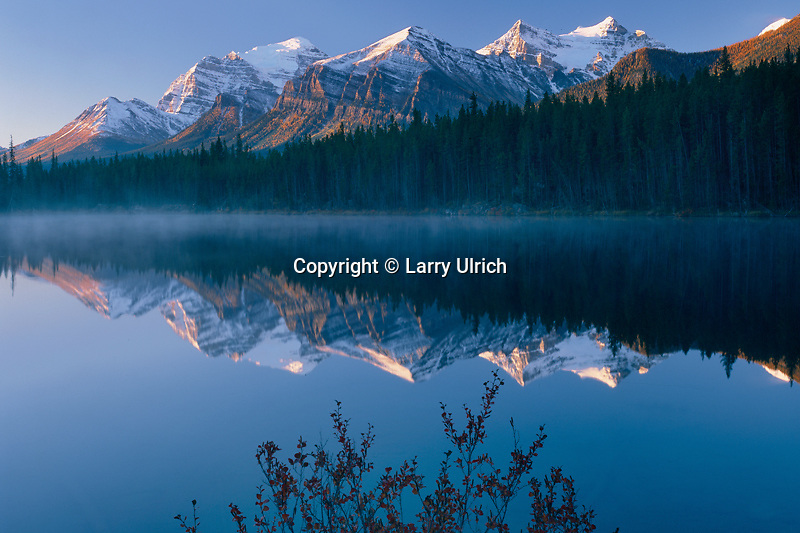 Dwarf birch on shore of Herbert Lake<br />   and the Bow Range<br /> Banff  National Park,  Rocky Mountains<br /> Alberta,  Canada