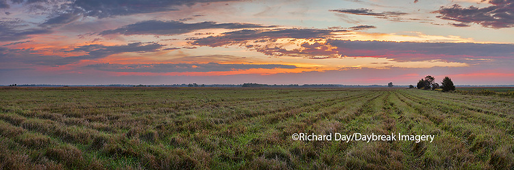 63893-02519 Sunrise at Prairie Ridge State Natural Area, Marion County, IL