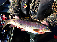 NWA Democrat-Gazette/FLIP PUTTHOFF <br />A black jig fooled this rainbow trout during a float trip on the White River below Beaver Dam.