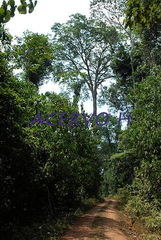 Acesso a Floresta Nacional do Tapaj&oacute;s no km 67<br /> 17/11/2007<br /> Santar&eacute;m, Par&aacute;, Brasil.<br /> Foto Paulo Santos