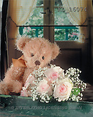 Interlitho, Alberto, CUTE ANIMALS, teddies, photos, teddy, roses, window(KL16074,#AC#)