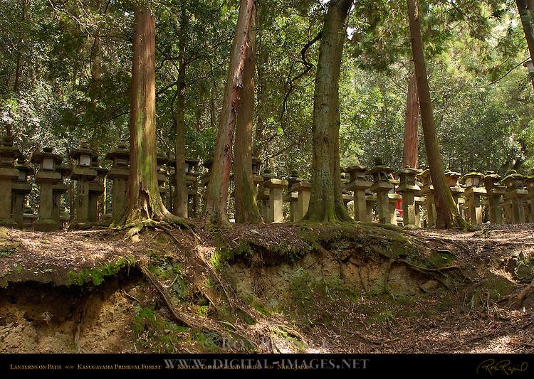 Ishidoro Stone Lanterns, Kasugayama Primeval Forest, Kasuga Taisha Grand Shrine, Nara, Japan