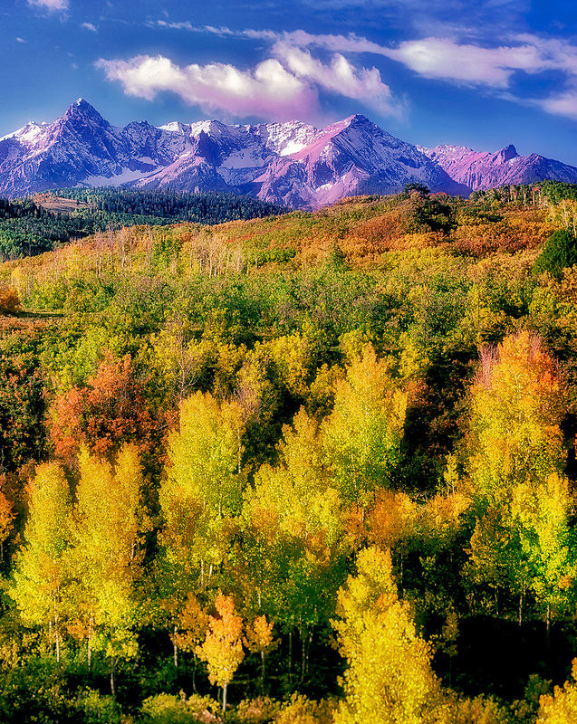 Aspens in fall color with San Juan Mountains. Uncompahgre National forest, Colorado