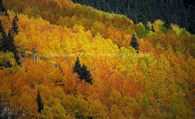 Sneffels Range, San Juan Range, Uncompahgre National Forest