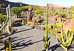 Cactus plants inside Jardin de Cactus designed by César Manrique, Guatiza, Lanzarote, Canary Islands, Spain