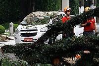 21.01.2018 - Queda de árvore na Av. Brasil em SP