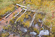 Pemigewasset Wilderness - Remnants of a sled road off of the old East Branch & Lincoln Railroad in the Shoal Pond Valley of Lincoln, New Hampshire. Swampy areas along sled roads were corduroyed with small trees laid crossways. The East Branch & Lincoln was a logging railroad, which operated from 1893-1948.