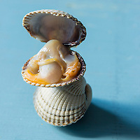 Europe,France, Normandie, Manche: Coques  - Stylisme : Valérie LHOMME  // Europe, France, Normandy: Cerastoderma, Mollusc shell, Styling : Valérie LHOMME