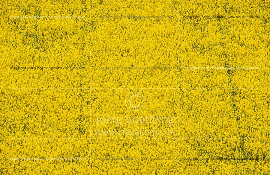 Deutschland, Feld mit Raps in Schleswig Holstein, Raps wird zu Biokraftstoffen verarbeitet / GERMANY, field with rape seed, rape seed oil is used for biofuel