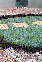 Succulents sempervivums surrounded by black mondo grass with garden stepping stones