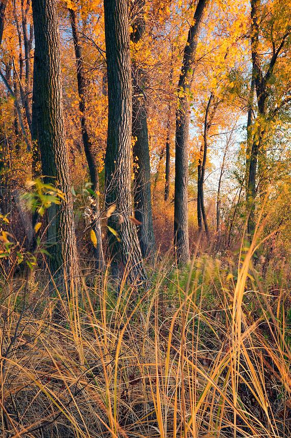 Wetland around Round Lake, Harrison County, Iowa