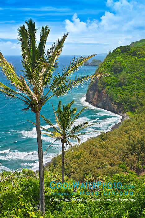 coconut palm trees and Pololu Beach, Pololu Valley, North Kohala, Big Island, Hawaii, USA, Pacific Ocean