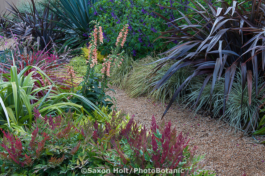Colorful garden border with Digitalis Digiplexis® 'Apricot' flowering perennial  with Nandina 'Obsession', Astelia 'Silver Shadow' by gravel path with Phormium 'Black Adder' and Lomandra 'Platinum Beauty'; Sunset Plants