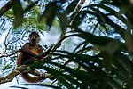 Black-handed Spider Monkey (Ateles geoffroyi) sub-adult in tree, Osa Peninsula, Costa Rica