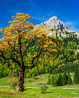 Oesterreich, Tirol, Herbststimmung, Grosser Ahornboden in der Eng, Laliderer Waende des Karwendelgebirges | Austria, Tyrol, Grosser Ahornboden, autumn mood at Eng-Alpe, Laliderer Walls of Karwendel mountains