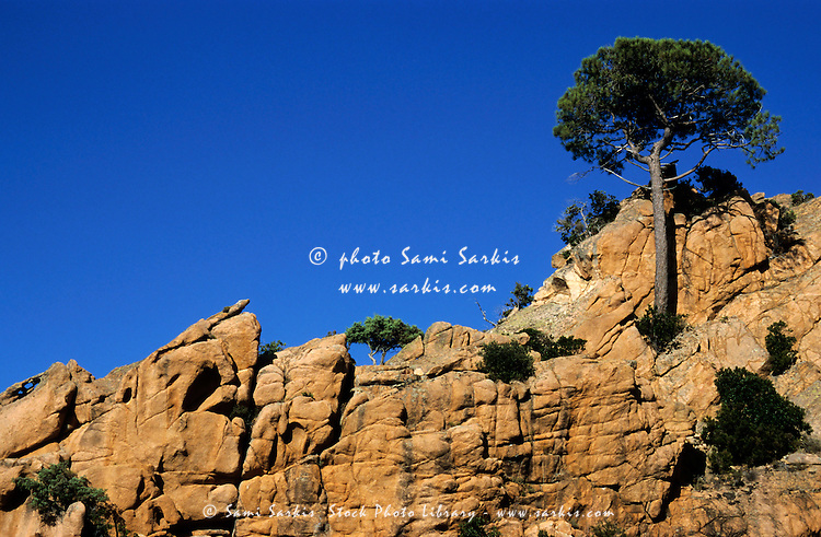 Pine trees growing on a rocky cliff, Piana, Corsica, France.