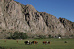 Cattle and cliffs near Coleville