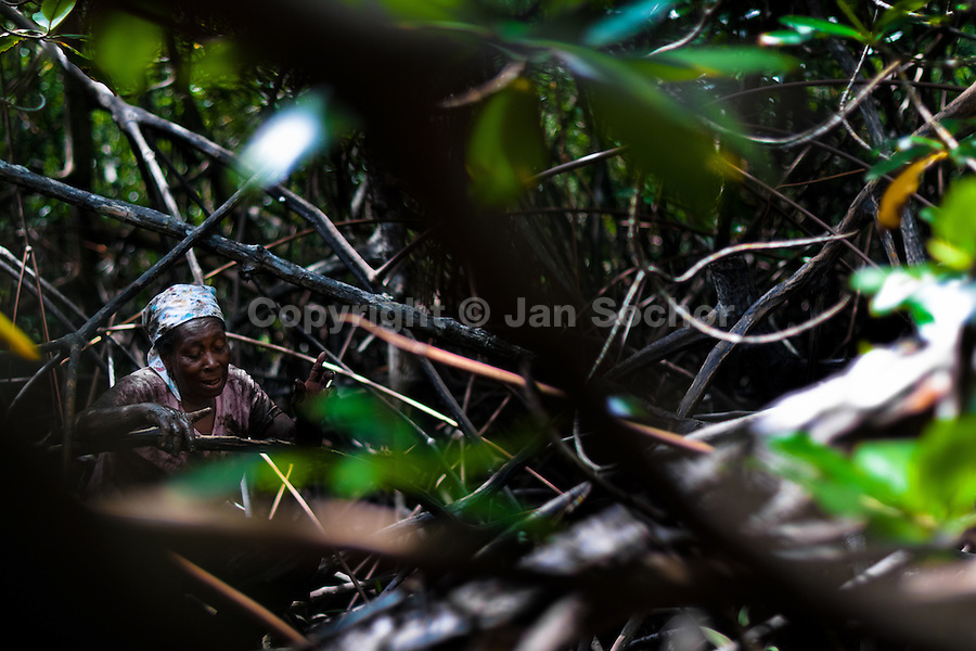 A Colombian woman walks through the dense maze of the trees while searching for shellfish in the mangrove swamps on the Pacific coast, Colombia, 16 June 2010. Deep in the impenetrable labyrinth of mangrove swamps on the Pacific seashore, hundreds of people struggle everyday, searching and gathering a tiny shellfish called 'piangua'. Wading through sticky mud among the mangrove tree roots, facing the clouds of mosquitos, they pick up mussels hidden deep in mud, no matter of unbearable tropical heat or strong rain. Although the shellfish pickers, mostly Afro-Colombians displaced by the Colombian armed conflict, take a high risk (malaria, poisonous bites,...), their salary is very low and keeps them living in extreme poverty.