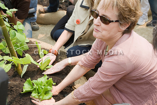 "Alice Waters, chef and founder/co-owner of Chez Panisse at Community Planting Day (July 12, 2008) of the Slow Food Nation Victory Garden at San Francisco's Civic Center. The garden project ""demonstrates the potential of a truly local agriculture practice that unites and promotes Bay Area urban gardening organizations, while producing high quality food for those in need.""* The garden is planted on the same site as the post-World War II garden sixty years ago. The food will be grown over a period of two months, harvested, and donated to people in need..*slowfoodnation.org"