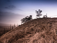 A fence line runs along a dry hillside  in Pu'uanahulu, Big Island of Hawai'i.