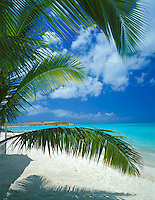 Antigua, West Indies   <br /> Palm fronds extend over the white sand beach at Dickinson Bay with Corbison Point in the distance - Caribbean Islands