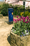 Tulips, blue pillar box and pink cottage, Island of Sark, Channel Islands, Great Britain