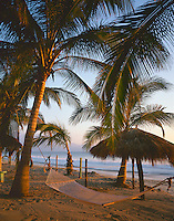 Nayarit, Mexico: Sunset light on coconut palms (Cocos nucifera) and hammock on the beach of Bahia de Banderas (Banderas Bay) near the village of Bucerias