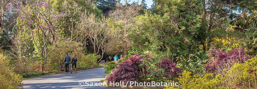 Path through Temperate Asia section of San Francisco Botanical Garden