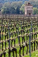 Europe/Europe/France/Midi-Pyrénées/46/Lot/Anglars-Juillac: Vignoble AOC Cahors du Château d'Anglars et pigeonnier