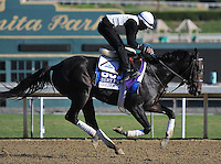 Golden Ticket, trained by Ken McPeek, trains for the Breeders' Cup Dirt Mile at Santa Anita Park in Arcadia, California on October 30, 2013.