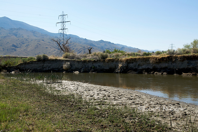 Rewatered section of the lower Owens River, controlled by Los Angeles Dept of Water and Power, and in this photo we have both!