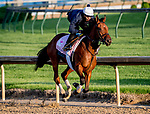 LOUISVILLE, KENTUCKY - APRIL 27: Dunbar Road, trained by Chad Brown, exercises in preparation for the Kentucky Oaks at Churchill Downs in Louisville, Kentucky on April 27, 2019. Scott Serio/Eclipse Sportswire/CSM