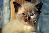 Portrait of a 4 week old kitten.