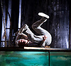 The Toad Knew <br /> James Thierree / Compagnie du Hanneton <br /> at Sadler's Wells, London, Great Britain <br /> Press photocall <br /> 3rd may 2017 <br /> <br /> James Thierree<br /> <br /> <br /> <br /> <br /> Photograph by Elliott Franks <br /> Image licensed to Elliott Franks Photography Services