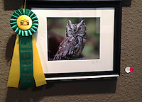 The Harker School - MS - Middle School - Liza Turchinsky, grade 7, will be exhibiting her photography work as a participant in the 2013 PhotoCentral Spring Show.   - Photo provided by Lala Mamedov, parent