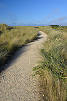 Footpath through the dunes at Holme Nature Reserve on the Norfolk coast