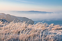 Hoar frost encrusts the grass on top of the Upton Cliffs above Bude. The sea, warmer than the cold dawn air, steams in front of the oak covered cliffs between Millook Common and Chipman Point.