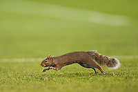 A squirrel runs onto the pitch stopping the game momentarily. Honduras defeated Haiti 2-0 during a CONCACAF Gold Cup group B match at Red Bull Arena in Harrison, NJ, on July 8, 2013.