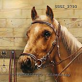 GIORDANO, REALISTIC ANIMALS, REALISTISCHE TIERE, ANIMALES REALISTICOS, paintings+++++,USGI2793,#A# horses,