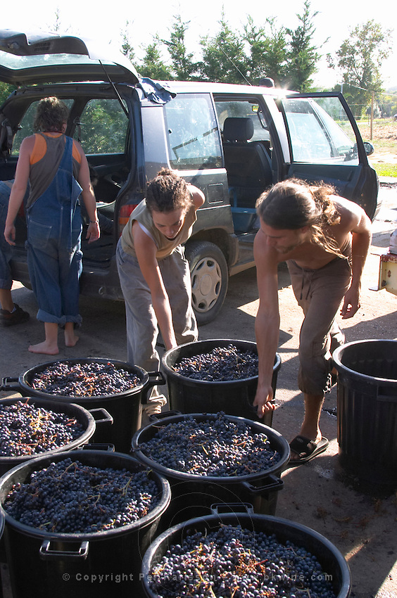 Harvest workers bringing in manually harvested grapes. Chateau Lapeyronie, Cotes de Castillon, Bordeaux, France