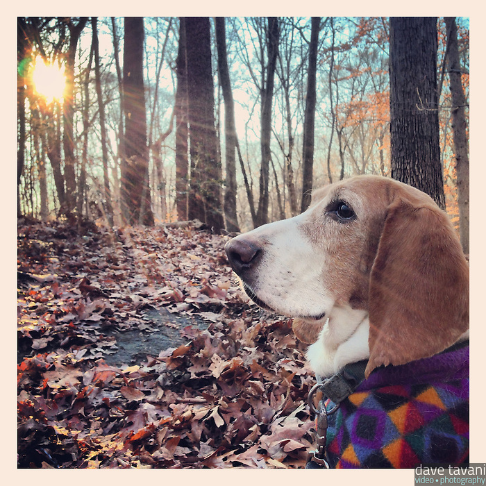 Elwood sits along the trail in Carpenter's Woods December 13, 2012.