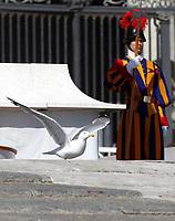 Un gabbiano cammina sul sagrato della Basilica di San Pietro durante l'udienza generale del mercoledi',  Citta' del Vaticano, 22 marzo, 2017.<br /> A seagull walks on the Saint Peter Basilica churchyard during the weekly general audience at the Vatican, on March 29, 2017.<br /> UPDATE IMAGES PRESS/Isabella Bonotto<br /> <br /> STRICTLY ONLY FOR EDITORIAL USE
