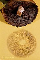 DC32-012c  Mushroom - cap with spore print