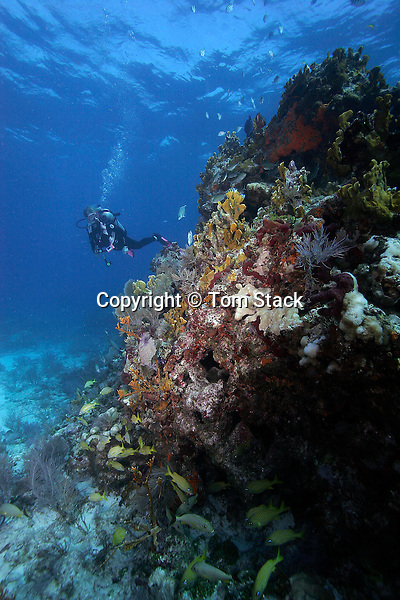Coral Reef, Key Largo, Florida