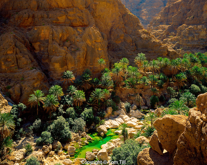 Date Palms in Wadi Shab, Sultanate of Oman Eastern Hagar Mountains   Arabian Pennisula  Water color from limestone spring
